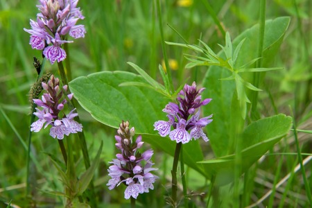 Tundra flowers in green grass Reklamní fotografie