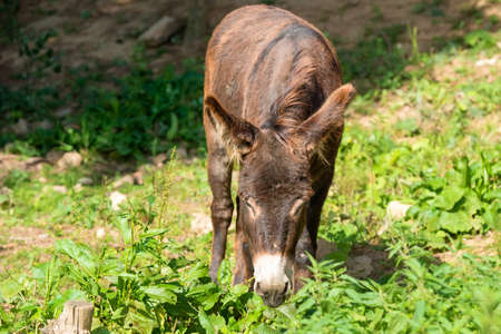 Donkey eating grass in nature on a summer day