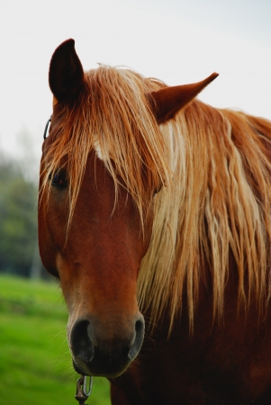 horse head close-up , brown Stock Photo - 15623542