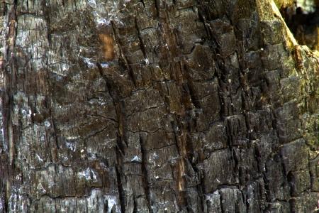 Group of charcoal lumps, black, ash coals Stock Photo
