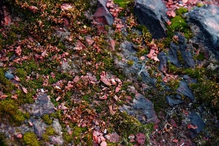 Red stones, rocks sunset light terikon, moss