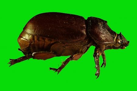 bug or bettle on green background macro shot