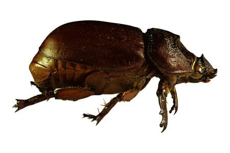 bug or bettle on white background macro shot  Stock Photo