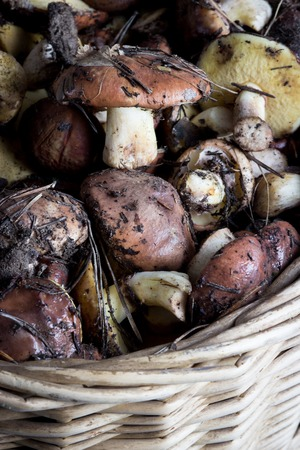 bunch of wild Raw Mushrooms In Basket