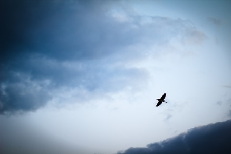 Heron flying on a cloudy sky Stock Image Stock Photo