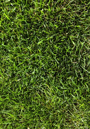 Green grass field Clean beautiful background  Stock Image Stock Photo