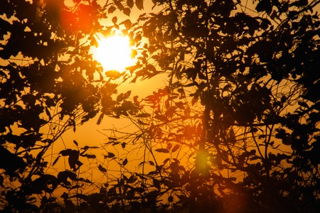 Backgrounds of the sunlight that make their way through the autumn tree branches