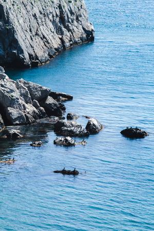 Birds on a cliff on sea Stock Photo