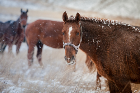 horse in the snow on a hill pasture Stock Photo
