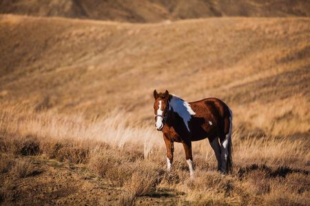 Pinto horse stands on the slopes and looking at you