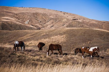 a herd of stallions on a hillside at sunset in autumn