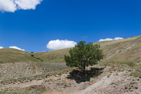 lonely tree in mountain hill in summer Stock Photo