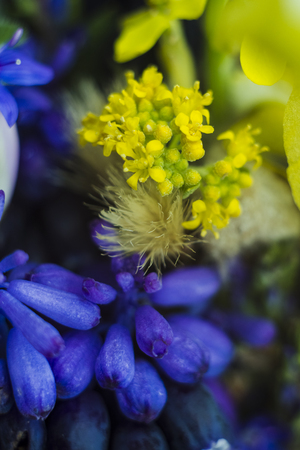 Abstract background of wildflowers