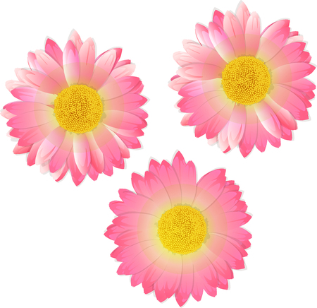 three pink flowers Illustration