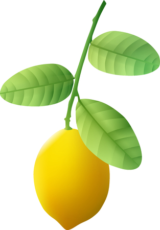 A ripe lemon weighs on a green branch. Vector illustration.