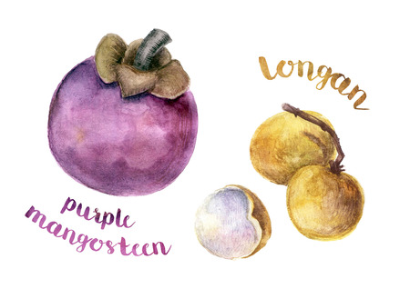 Drawn watercolor exotic Asian fruits. Raster image. Stock Photo