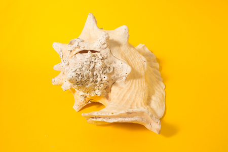 brilliant   undersea: Large shell on a yellow background. Conceptual photography