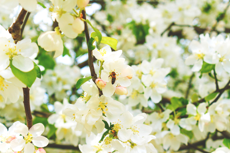 Bee on a flower tree