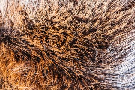 Fur of a wild animal