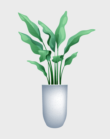 Green flower with big leaves in a pot. Vector illustration of tropical plant strelitzia, jungle design Vector Illustration