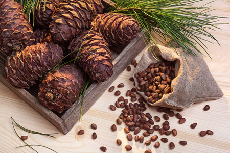 Cedar tree cones and seeds