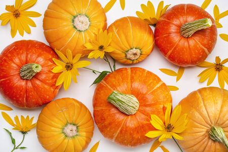 October background with round pumpkins and yellow flowers on white. View from above.