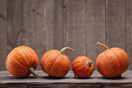 Four decorative mini-pumpkins on dark wooden background, studio shot, closeup. 版權商用圖片