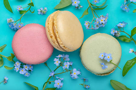 Macaroons of different colors on a blue background from forget-me-nots. Wallpaper and textures, close-up. Standard-Bild