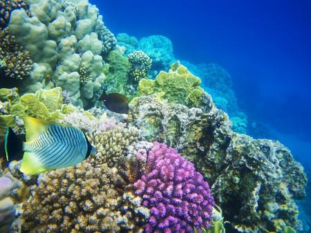 corales marinos: Fotograf�a submarina de un arrecife de coral duro  Foto de archivo