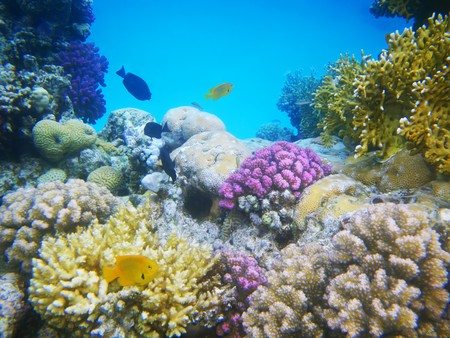 Underwater photo of a hard-coral reef photo