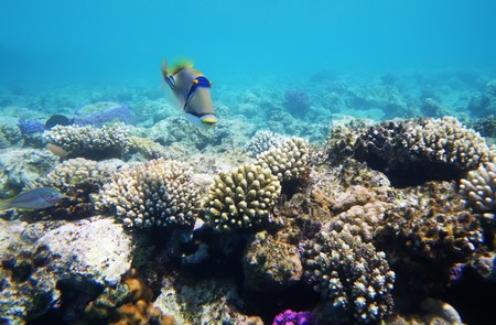 Underwater photo of hard coral reef with fishes, Egypt, Red sea Stock Photo - 8207770