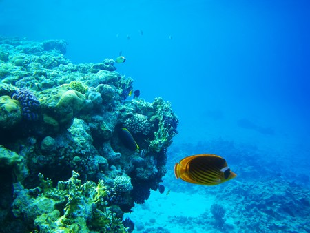Underwater photo of hard coral reef with fishes, Egypt, Red sea Stock Photo