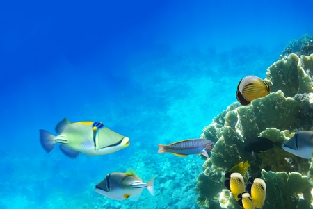 Underwater life of a hard-coral reef, Red Sea, Egypt photo