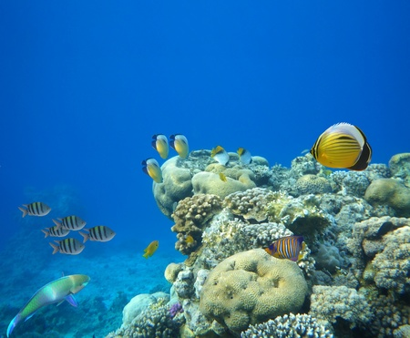 Underwater life of a hard-coral reef, Red Sea, Egypt Stock Photo - 9344833
