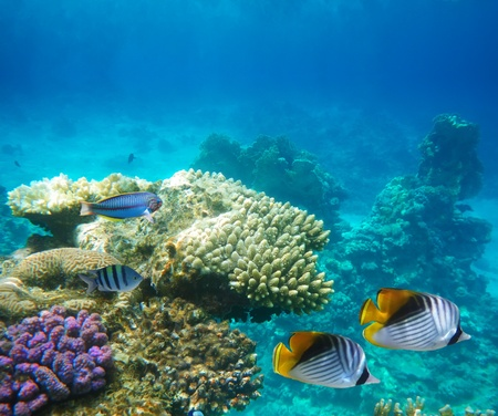 Underwater life of a hard-coral reef