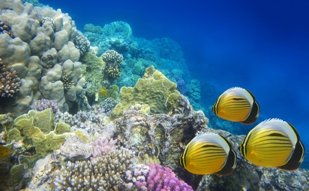 Underwater life of a hard-coral reef Stock Photo - 11374635