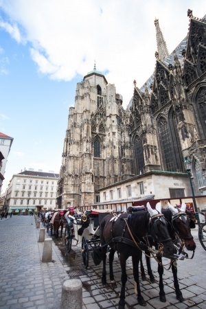 horse carriage near St  Stephan Cathedral, Vienna, Austria photo