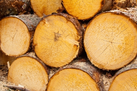 timber pattern of pine wood Austrian Alps
