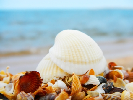 Landscape with shells on tropical beach Stock Photo - 21718882
