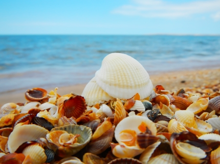 Landscape with shells on tropical beach Stock Photo - 21718883