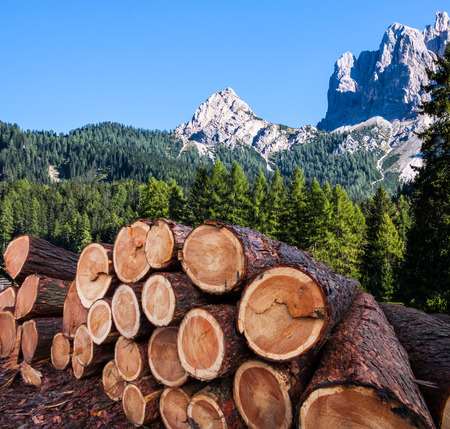 timber logging in pine forest, Austrian Alps photo