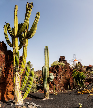 Cactus in park on Lanzarote, Canary islands, Spain Stock Photo - 29561091