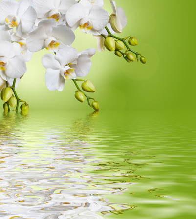 Beautiful white orchid flower phalaenopsis on green background reflected in water Banco de Imagens