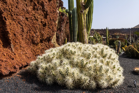 Cactus in park on Lanzarote, Canary islands, Spain Stock Photo - 29569694