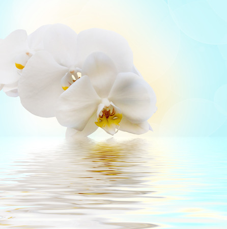 Beautiful white orchid flower phalaenopsis reflected in water photo