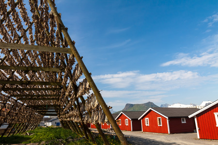 rorbu: Cod fish at the drying racks and traditional Norwegian house rorbu, Lofoten, Norway