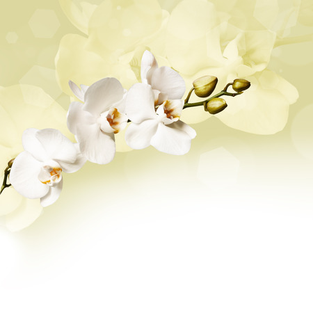 Beautiful lilac orchid flower phalaenopsis with copyspace Stock Photo
