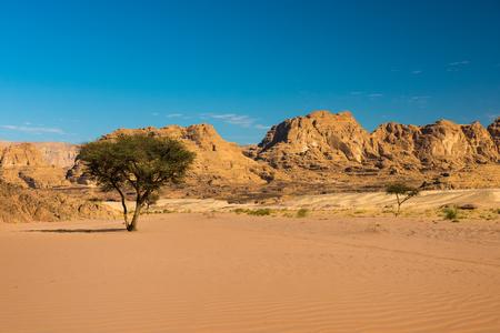sinai: dry desert and tree sinai peninsula egypt