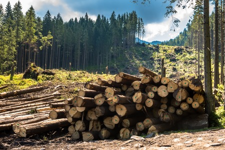 lumbering: Log stacks along the forest road, Tatry, Poland, Europe Stock Photo