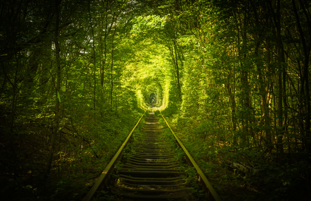 old mysterious forest and railway tunel of love